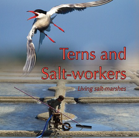 Terns and Salt-workers