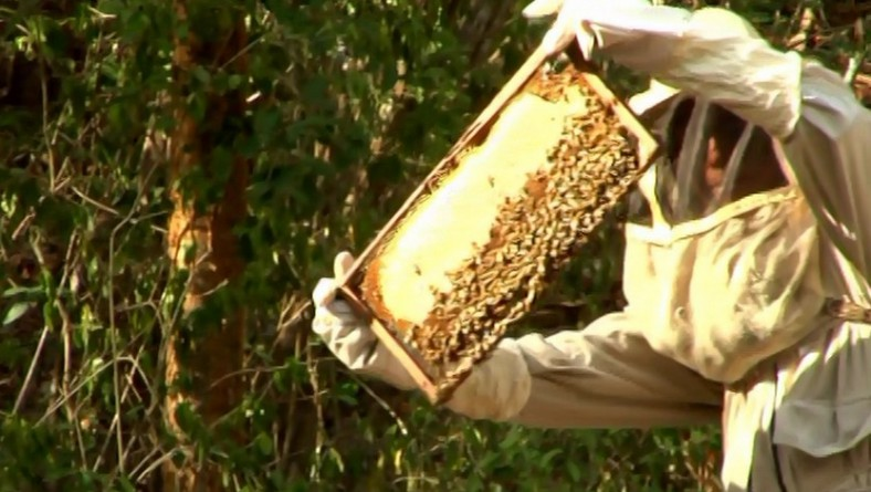 Saving The Life Keepers: The New Science of Sustainable Beekeeping