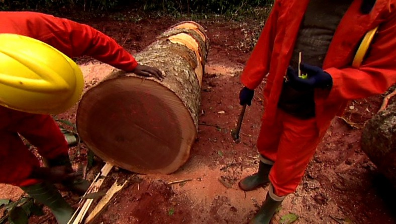 Tracing Our Timber