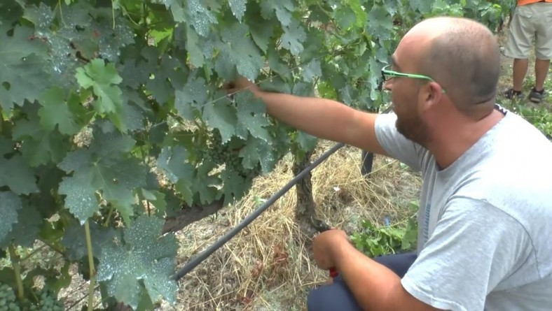 Belias Brothers: Young Family Farmers Producing Wine in Greece