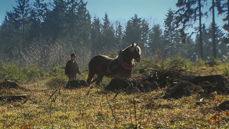 People, Horses and Forests