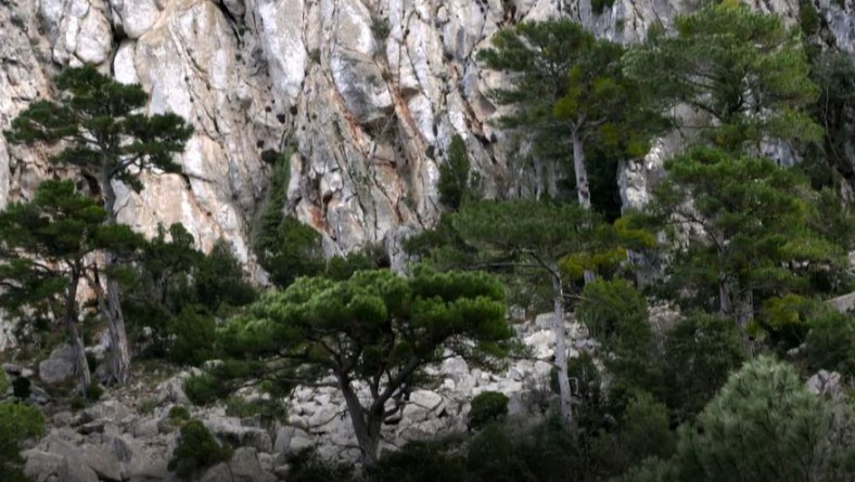 Wise Use of Our Forests: The Integrative Approach