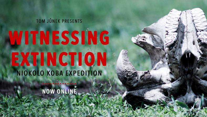 Witnessing extinction