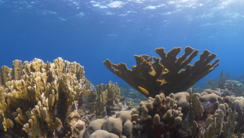Growing Corals
