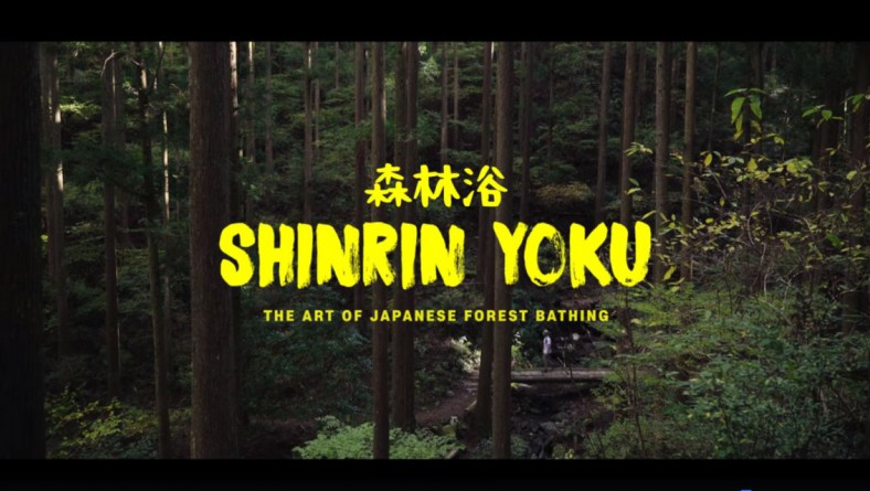 Japanese Forest Bathing – A Digital Detox Story